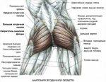 Анатомия ягодицы – Анатомия ягодиц | Бомба тело