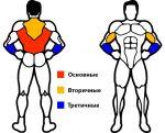 Какие мышцы растут при подтягивании – Виды подтягиваний икакие мышцы работают при подтягивании