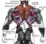 Упражнение для спины в тренажерном зале – Базовые и вспомогательные упражнения на спину в тренажерном зале