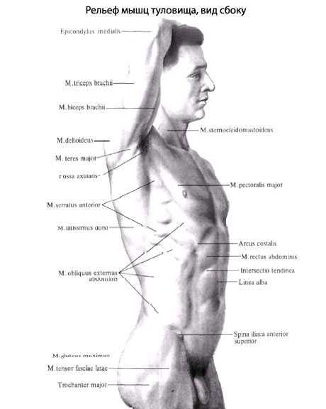 Как накачать грудь девушке: упражнения и программа тренировок