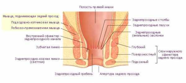 roliki-salli-uvelichit-elastichnost-anusa